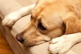 Canine Healthguard